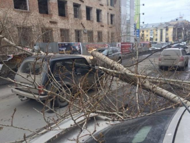 На самарца во время движения на своем авто упало дерево