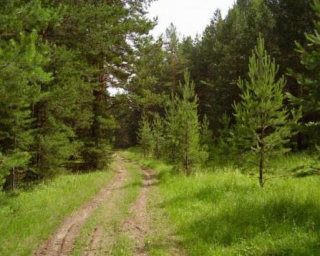В Самарской области открыли леса