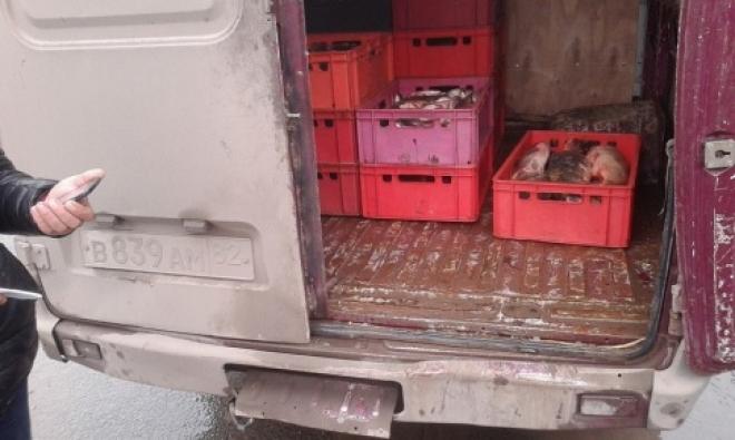В Самаре изъяли около 100 кг рыбы без ветеринарных документов