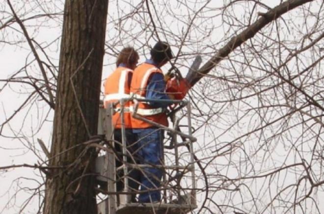 В Самаре стартовала валка аварийных деревьев