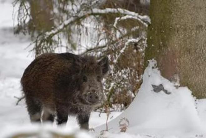 Для охотников Самарской области изменен порядок выдачи разрешений на охоту