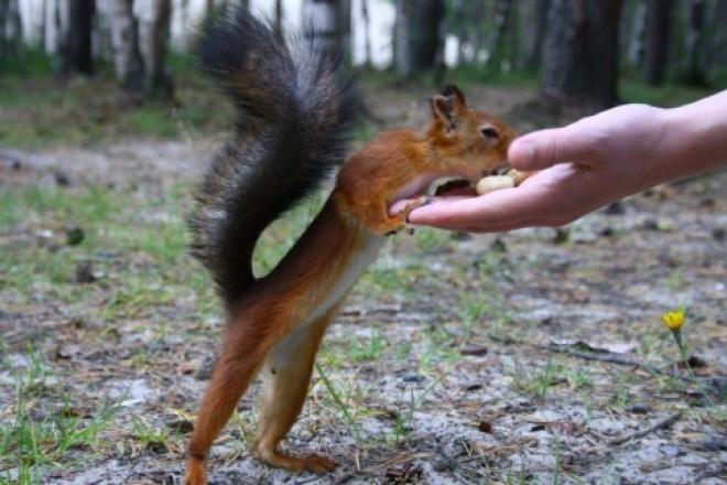 Попытка покормить белку в парке Самары обернулась уколами от бешенства