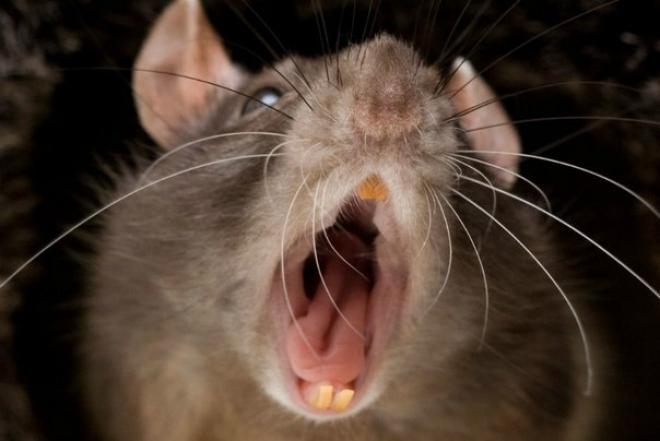 В Самарской области зарегистрирована вспышка заболеваемости мышиной лихорадкой