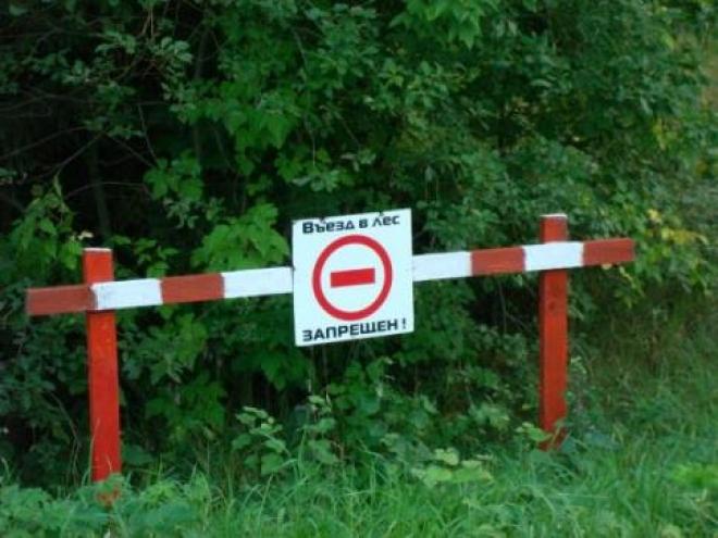 Ограничения посещения лесов не коснулись 9 районов Самарской области