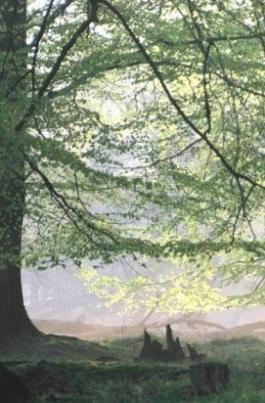 Зеленая планета постер