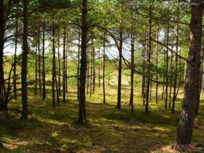 В четырёх районах Самарской области снят запрет на посещение лесов