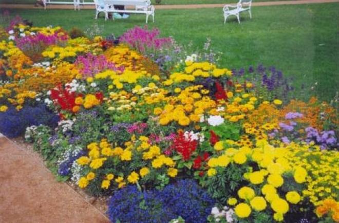 Самару украсят сложными цветочными композициями