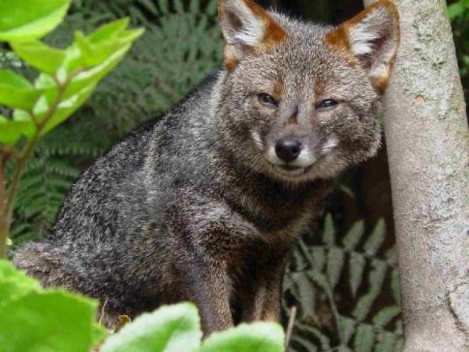 В самарском зоопарке приятное прибавление в семействе чернобурых лис