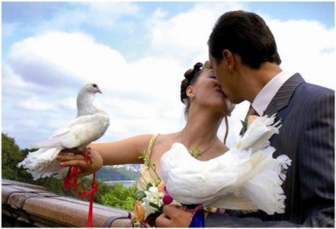 В Самарской губернии 145 пар решили узаконить свои отношения в День семьи, любви и верности